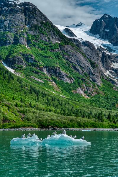 Petersberg Alaska 2019-28.jpg
