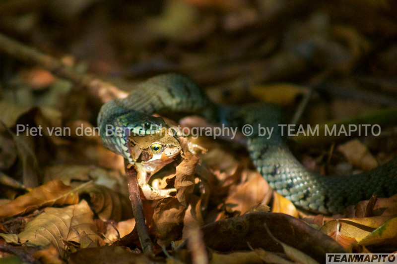 Ecology & Wildlife by TEAM MAPITO