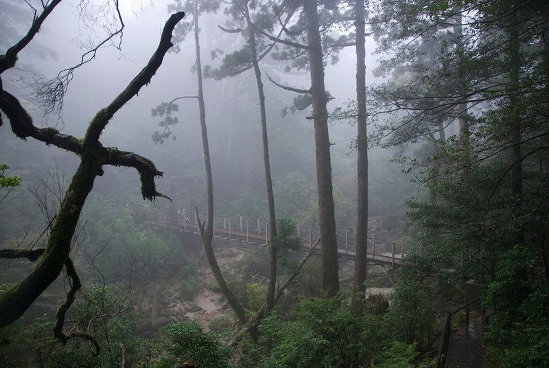Shot of the wooden suspension bridge from the top at Shiratani Unsuikyo in Japan