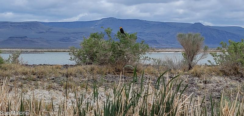 05-19-2021 Summer Lake Wildlife Refuge-29.jpg