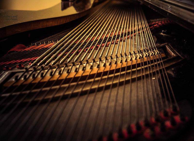 Piano strings.jpg