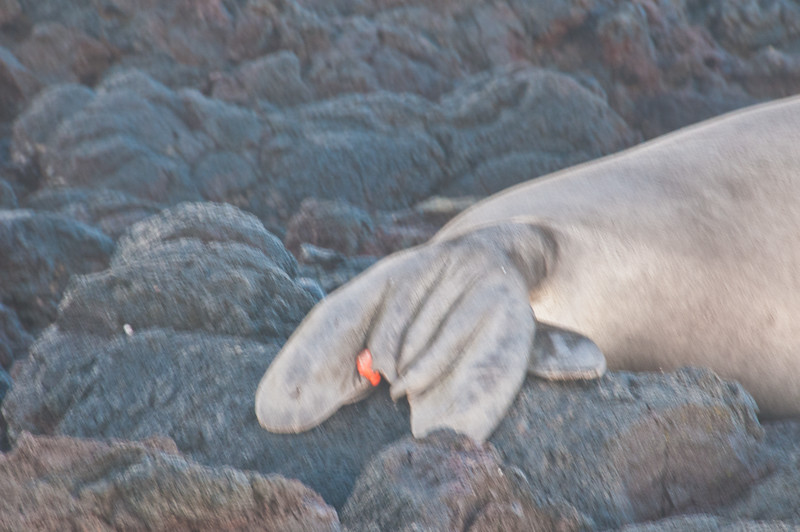 Seal (12 of 12)