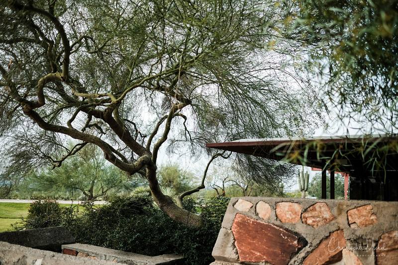 1-22-17218849Taliesidn West - Frank Lloyd Wright.jpg