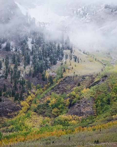 Snow and fall aspens, McGee Creek Canyon, John Muir Wilderness, California, September 2014.