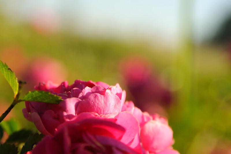 LTD_2011-04-28_0195