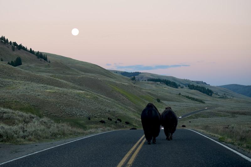Yellowstone (45).jpg