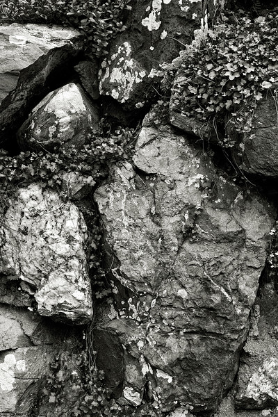 ivy and rocks