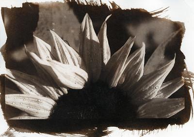 Alternative / Polaroid Photos