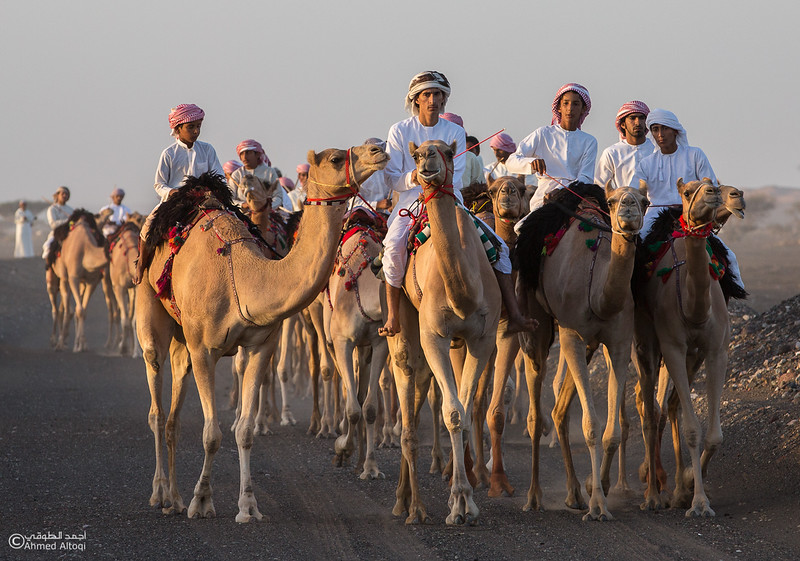 FE2A3481- Camel Race.jpg