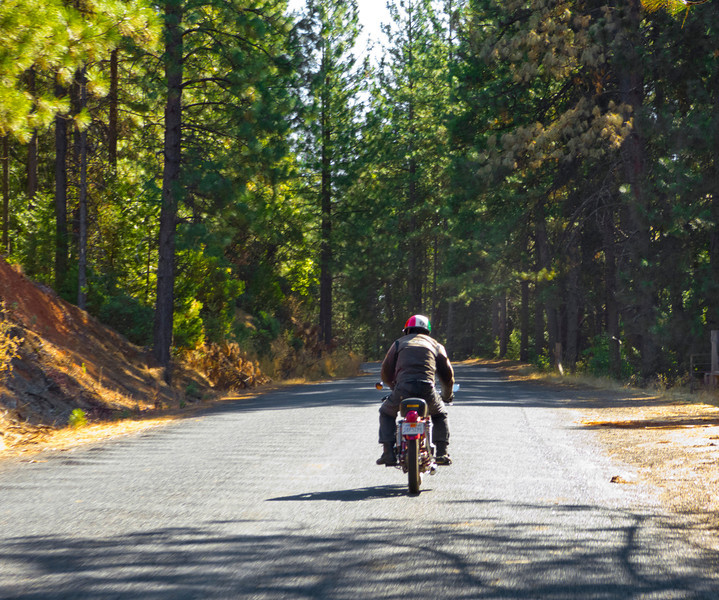 Following Hugo in the Plumas National Forest.