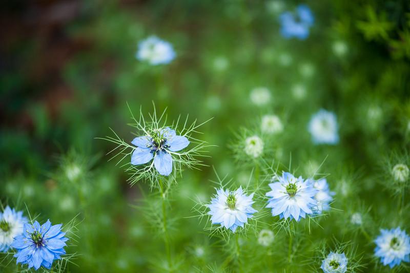 Weird Flowers at 105mm