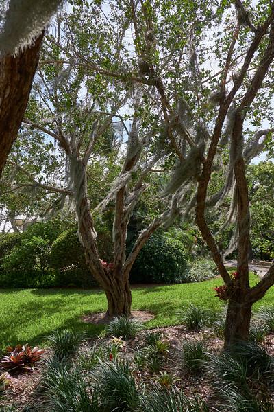 Useppa-Botanical-Walk-187.jpg