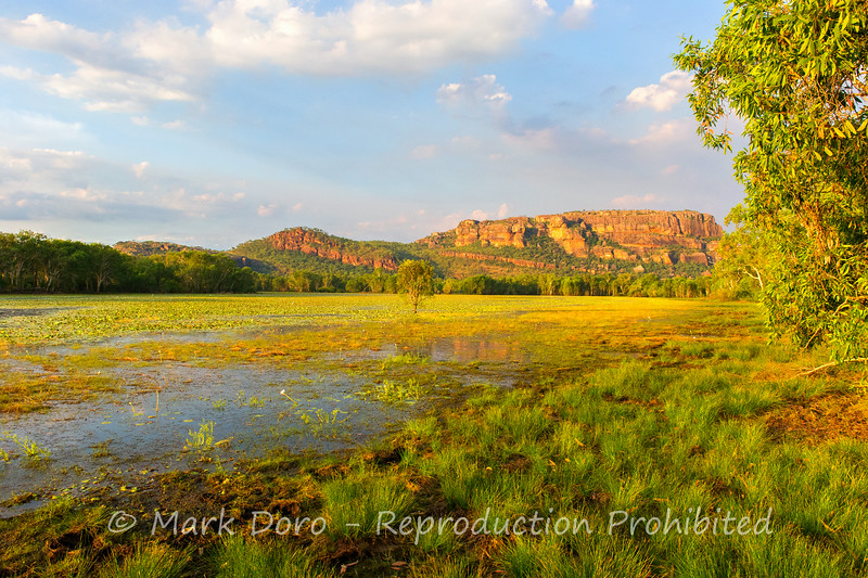 Late afternoon, Anbangbang Billabong, Kakadu, Northern Territory