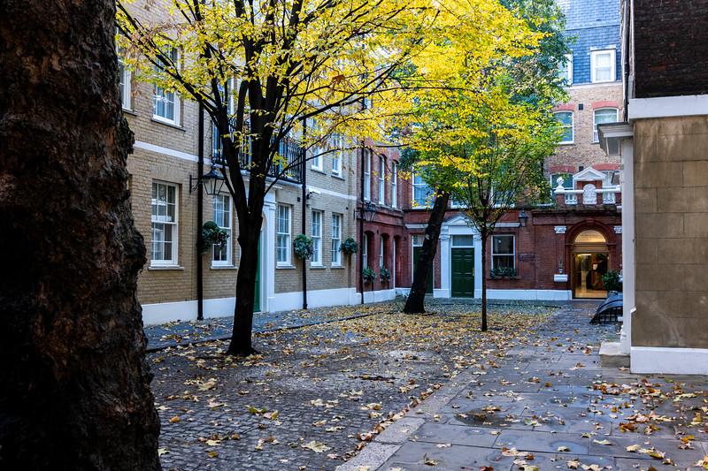 Street with trees .jpg