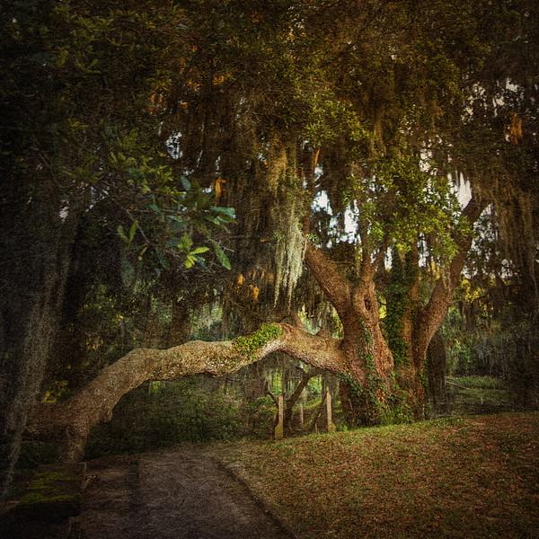 Middleton Place National Historic Landmark,  Charleston, South Carolina