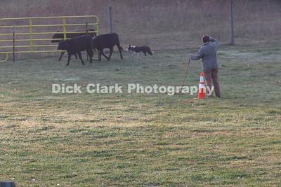 Saturday Advanced Cattle