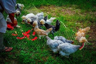 Sony A6400 50mm f/1.8 Chicks