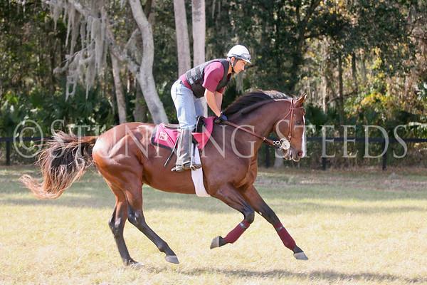 Mr Besilu in training Dec2012
