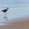 SeagullSandbridgeBeach-007