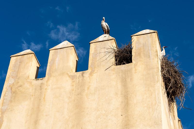 Stork nest in Fes