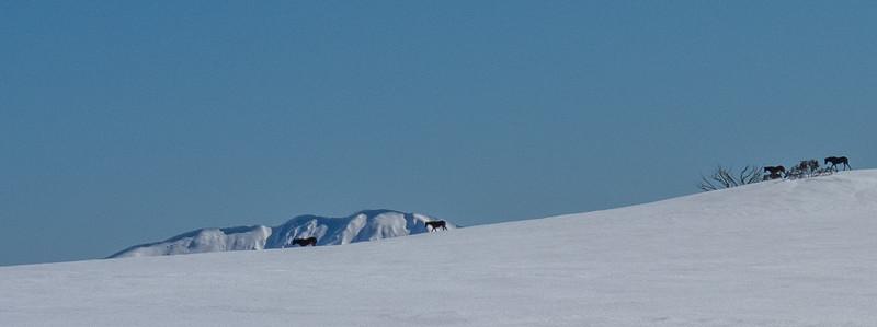 2021-SkiTour-2423.jpg