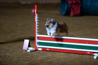 Bayshore Companion Dog Club AKC Agility Trial February 13-15