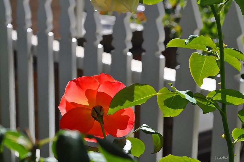 backyard 10-14-2011.jpg