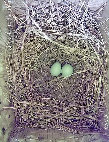 May 24, Egg 2