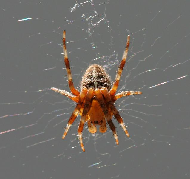 2435 Spider.jpg