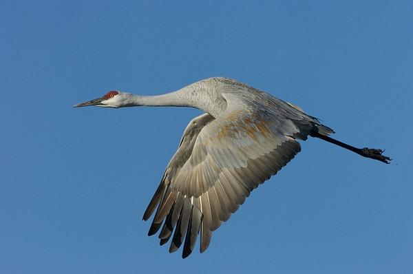Shooting Birds In-Flight