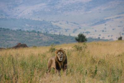 African Safari - Mercy House Vision Trip
