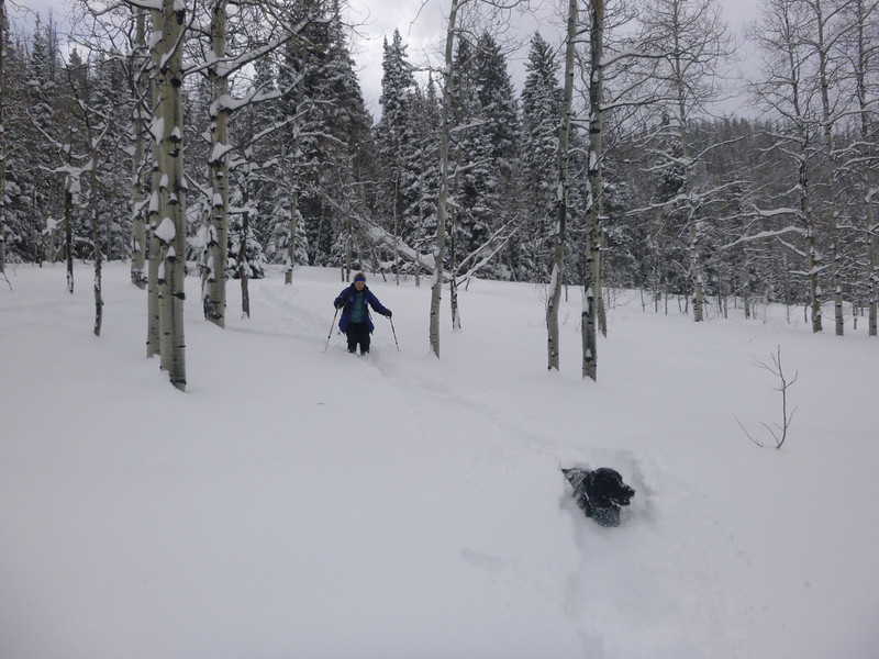 . Kyle Wagner cross-country skis through the backcountry with Rosie, the very fit black Labrador. (Photo by Steven King)