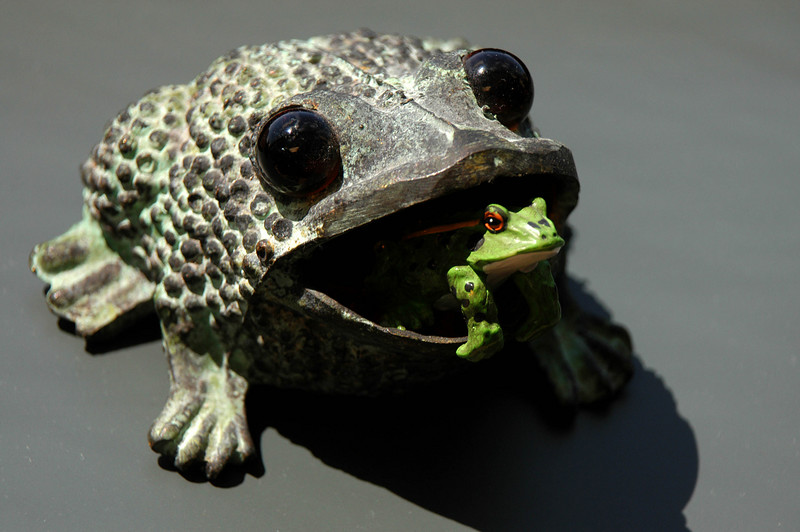 4/12/07 – Several years ago people started giving me frogs. I don't know why. I have them in my office window now. This big bronze frog is one I bought myself in New Mexico while on vacation. I don't remember where the smaller frog came from.