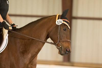 Horse 574
