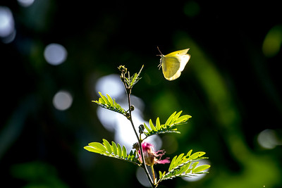 Hummingbird 12 2019