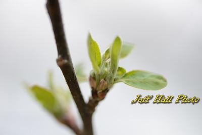 Lindabury Orchard