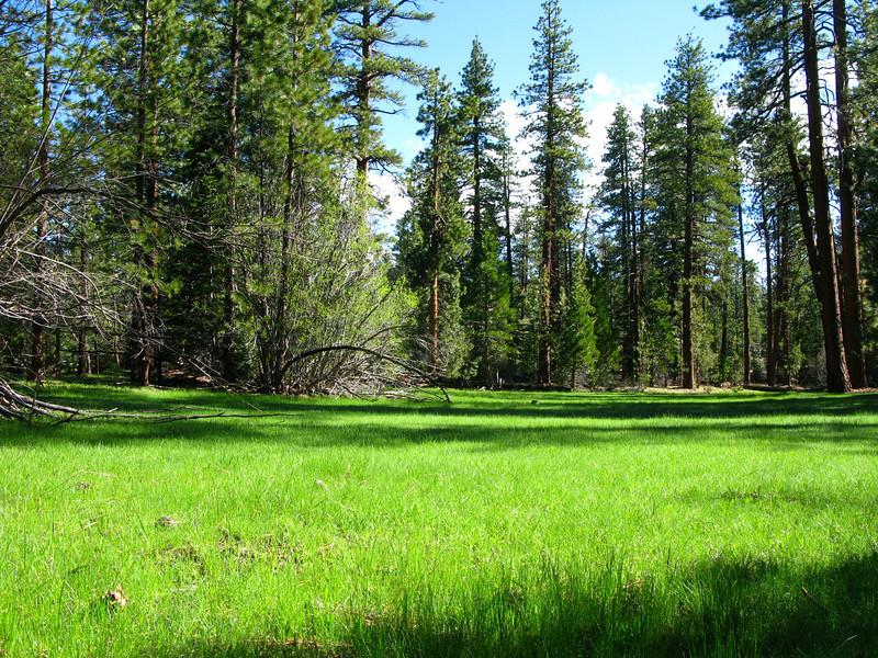 Jerkey Meadow