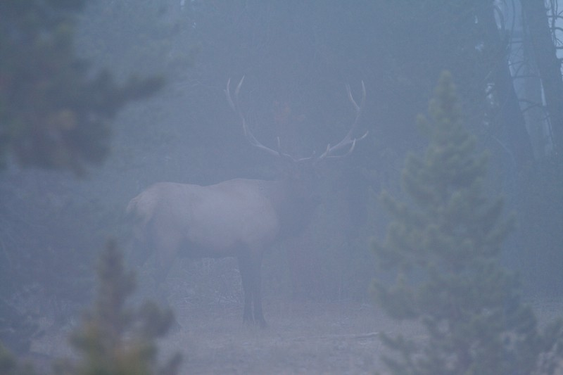 Fog makes for difficult shooting but often results in interesting shots [September; Yellowstone National Park, WY]