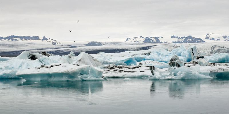 Jökulsárlón Glacier Lagoon - arctic terns in the sky
