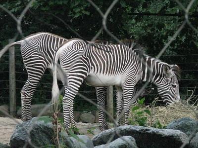 07-09 Zoo