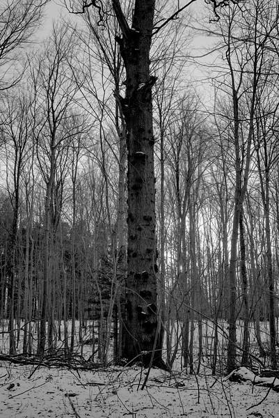 Tree_2712.jpg