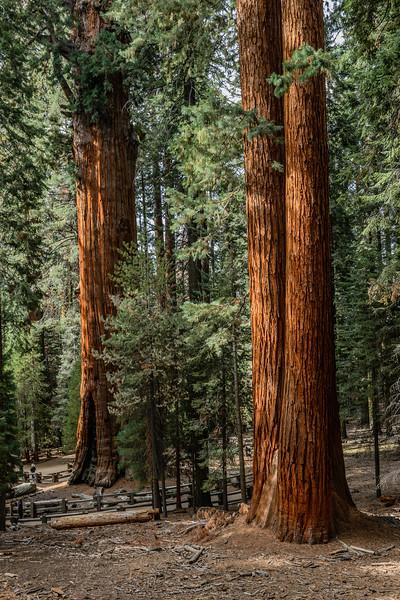 Sequoia - October, 2015