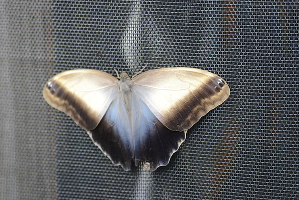 2013butterflies-brookside