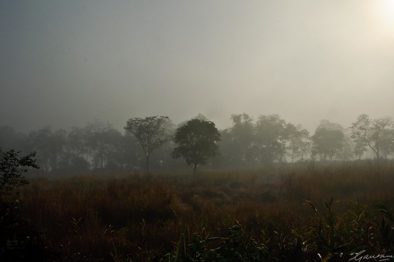08: Kaziranga Forests 23 December 2011