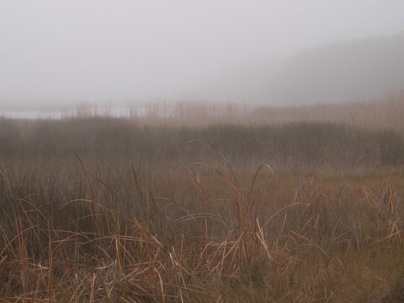 Marsh at Morris Landing