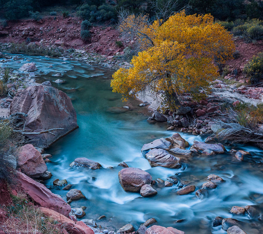 Beautiful lone cottonwood tree on the Virgin River in Zion National Park