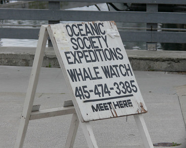 Whale-Missing with Sharon