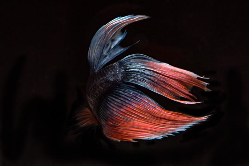 Fish-Beta Blue-Edit.jpg