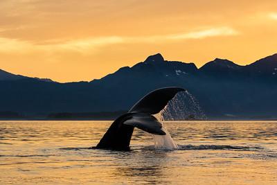 Southeast Alaska 2016