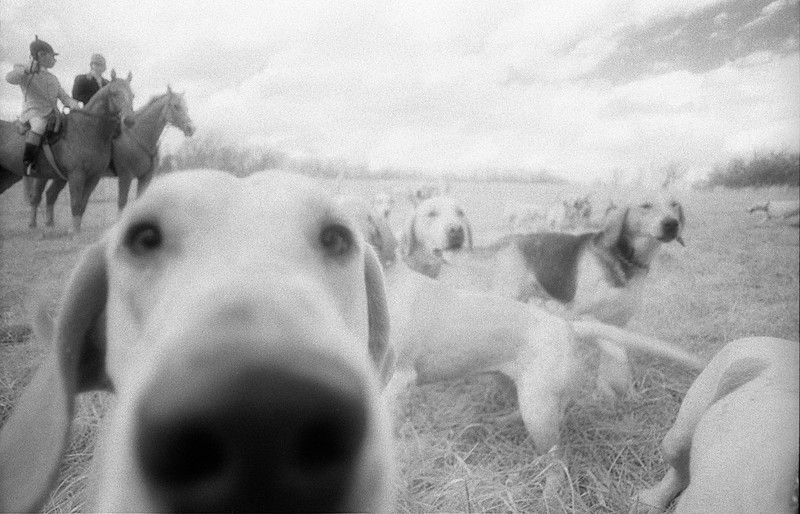 Hunt Dog Nose